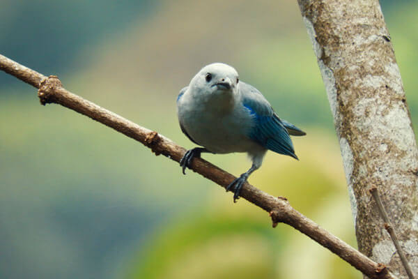 Jungle birds – diversity of species in Colombia