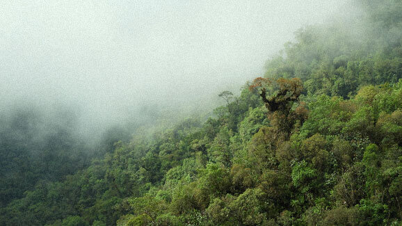 Low hanging clouds over the colombian rain forest
