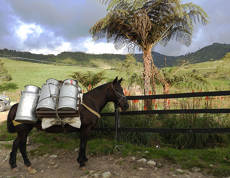 Horse in colombian mountain panorama
